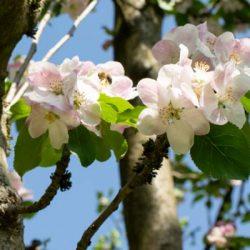 flowers-cider-tree-aboutus-600px